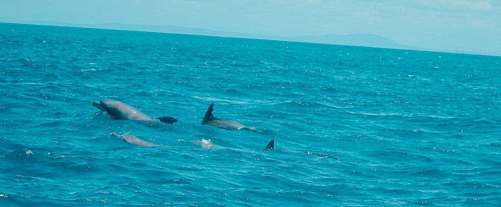 Dolphins during a trip to Wasini Island