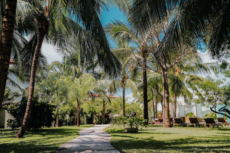 palms waving at a resort